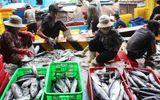 Cá ngừ đại dương mất mùa ngư dân thu lỗ trầm trọng