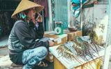 """Ngư dân Khánh Hòa mang tôm hùm lên Sài Gòn bán rẻ """"vớt vát"""" sau bão số 12"""