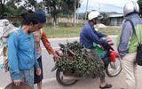 """Cau non """"cháy hàng"""" vì thương lái lùng mua xuất sang Trung Quốc"""