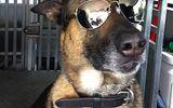 Chùm ảnh chó nghiệp vụ  bảo vệ Tổng thống Mỹ trong mỗi chuyến công du