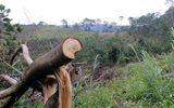 Để mất gần 50 ha rừng, chủ tịch xã bị kỷ luật cảnh cáo