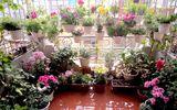 Mãn nhãn với vườn hoa, rau củ quả trồng trên sân thượng