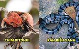 5 sinh vật nhìn rất dễ thương nhưng chạm nhẹ có thể mất mạng