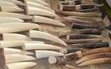 Tạm giữ hơn 47kg ngà voi vận chuyển từ Đức về Việt Nam qua đường bưu điện