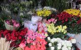 Tin tức - Hà Nội: Giá hoa tươi tăng mạnh trước ngày 20/11