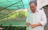 Tin tức - Liều lĩnh nuôi cà cuống, chủ trang trại thu tiền triệu mỗi ngày