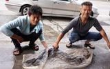 Hành động bất ngờ của người bắt được cá chình hoa khổng lồ 35 tuổi