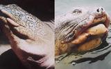 """Nhà sử học Dương Trung Quốc: """"Hồ Gươm không nhất định phải có rùa"""""""