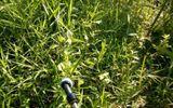 Cắt cỏ, phát hiện thi thể trẻ sơ sinh trong công viên
