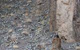 Tài ẩn thân siêu việt của động vật: Đố bạn tìm thấy con báo trong bức ảnh