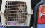 Làm chết 30 chú chó trong xe tải, chủ sở hữu đối mặt 90 năm tù
