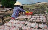 Sức khoẻ - Làm đẹp - Phát hiện hàng loạt cơ sở chế biến cá khô sử dụng chất cấm độc hại
