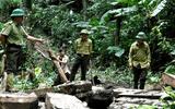 Tin tức - Khởi tố, bắt tạm giam 2 Trạm trưởng bảo vệ rừng