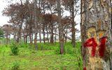 Bắt tạm giam một Trưởng ban Ban Quản lý rừng phòng hộ