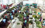 Xuất khẩu hoa Đà Lạt gặp khó vì giống bản quyền