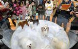 Người Trung Quốc chi hàng tỷ đô mỗi năm để chăm sóc thú cưng