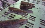 Bắc Ninh: Phát hiện thêm một xưởng phế liệu chứa đầu đạn gần hiện trường vụ nổ