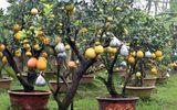 Lão nông thu về hàng trăm triệu nhờ ghép 10 loại quả dịp Tết