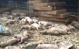 Chập điện trong trang trại, 1.200 con lợn chết cháy