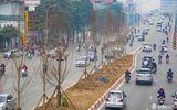 Kỳ vọng cây phong lá đỏ đem lại diện mạo mới cho Thủ đô