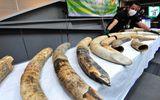 Trùm buôn lậu gốc Việt buôn bán động vật hoang dã bị tóm tại Thái Lan