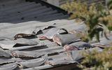 Tin thế giới - Yêu cầu báo cáo vụ phơi vây cá mập trên mái nhà thương vụ Việt ở Chile