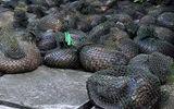Tin tức - Phát hiện hơn 100 cá thể tê tê còn sống được chở từ biển vào đất liền