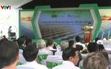 Khởi công nhà máy điện mặt trời với mức đầu tư 800 tỷ đồng