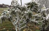 Mẫu Sơn lạnh âm 1 độ C, băng tuyết phủ trắng xóa