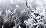 Dự báo thời tiết ngày 30/1: Miền Bắc rét đậm, rét hại kéo dài 6 ngày liên tiếp