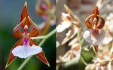 Tin tức - Ngắm những loại hoa khiến nhiều người tròn mắt vì hình dáng chẳng giống ai