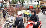 Người Hà Nội nườm nượp xuống phố mua đào, quất về chơi Tết Mậu Tuất