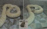 Sở thú Trung Quốc nuôi trăn bằng chó con đổ lỗi cho nhân viên