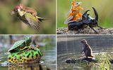 """Khoảnh khắc ngộ nghĩnh: Các loài động vật khác loài """"cõng"""" nhau đầy """"âu yếm"""""""