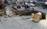 Sài Gòn: Cây me bật gốc, 3 người bị thương nặng