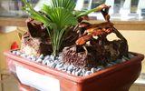Clip: Nấm linh chi bonsai độc lạ hút khách Thủ đô dịp Tết Mậu Tuất