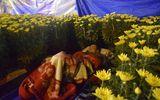Phóng sự ảnh: Cảnh màn trời chiếu đất trong giá lạnh của người bán hoa tết ở Đà Nẵng
