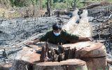 Tin tức - Khởi tố, bắt tạm giam đối tượng chủ mưu phá 15ha rừng