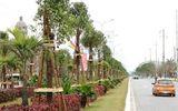 Tin tức - Hải Phòng trồng 1045 cây Long Não trên đường hoa phượng dài nhất Việt Nam