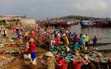 Tin tức - Ngư dân Quảng Ngãi trúng đậm mùa cá cơm trong chuyến biển đầu năm