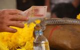 """""""Rắn thần"""" bị chuyển đi khỏi mộ, 260 triệu đồng tiền cúng rắn sẽ dùng thế nào?"""