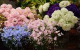 """""""Chán"""" hoa nội, cánh mày râu đặt hoa nhập khẩu giá vài trăm nghìn/bông ngày 8/3"""