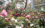 Điểm vui chơi 8/3: Ngắm trăm hoa đua sắc trước ngày khai mạc Lễ hội hoa hồng Bulgaria