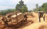 Bắt giữ 5 đối tượng liên quan vụ hàng đoàn xe chở gỗ lậu ở Đắk Lắk