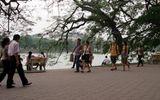 Hà Nội lên kế hoạch thay toàn bộ đá lát quanh Hồ Gươm