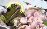 Sán bò trong ngực chỉ vì ăn…ếch sống