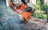 Tin thế giới - Thợ làm vườn chết lơ lửng trên cây vì cắt trúng cuống họng