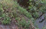 Hoảng hốt phát hiện thi thể 2 thanh niên dưới chân cầu