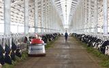 Tổ hợp trang trại bò sữa công nghệ cao Vinamilk tại Thanh Hóa mở ra bước phát triển mới cho ngành nông nghiệp chăn nuôi bò sữa tại Việt Nam