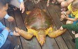 Rùa biển quý hiếm, nặng 80 kg mắc lưới ngư dân Hà Tĩnh